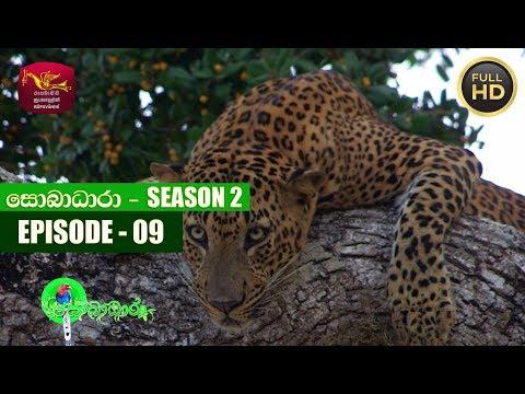 Sobadhara - සොබාධාරා | Season- 02 | Episode- 09 | 2018-03-09 | Rupavahini Documentary