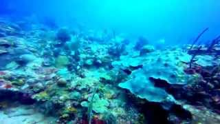 preview picture of video 'Buceo Boca Chica 01 11 2014'