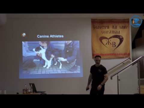 «Дифференциальная диагностика хромоты у собак» Ноэль Фицпатрик в ВЦ ЗООВЕТ