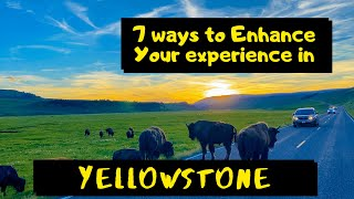 7 Ways to Enhance your Yellowstone National Park Experience | Yellowstone Travel Tips