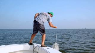 Fish Mavericks Catching Bait