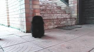 Янко - забавная смешная собака - невозможно остановить!