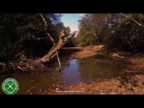 Turtleback Trail. Acworth, GA
