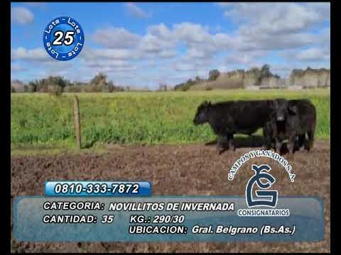 Lote NTOS - Gral Belgrano