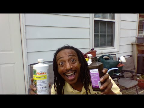 , title : 'HOW TO USE HYDROGEN PEROXIDE & WHEN TO FERTILIZE YOUR PLANTS -  Gardening For Beginner 2020  #withme