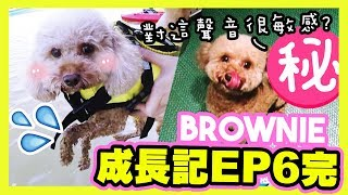 """[🐶BROWNIE Growing Diary #6 final] First time went to the beach...? Very sensitive to """"this sound""""?"""