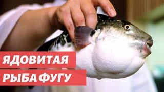 Удивительная еда со всего мира - Рыба фугу: рискованный японский деликатес.