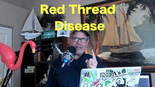How to Treat Red Thread Fungus in the Lawn | Dollar Spot Disease | Lawn Disease