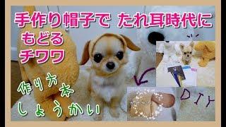 手作り帽子でたれ耳時代に戻るチワワ🐶犬服型紙本紹介📕作り方~Chihuahua Backs To The Ears Dropped By Handmade Hat 📗How To Make