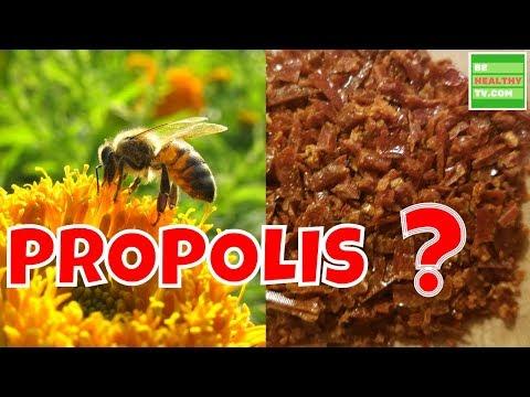 What Is BEE PROPOLIS  Health Benefits of Bee Propolis