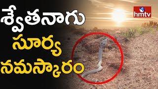 భద్రాచలం అటవీప్రాంతంలో అద్భుత దృశ్యం !!   White Cobra Spotted in Bhadrachalam   Telugu News   hmtv