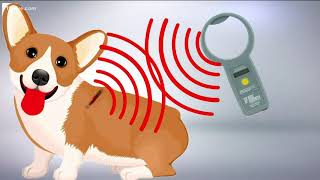 Science Behind Your Pet's Microchip