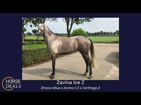 Zavina Ice Z