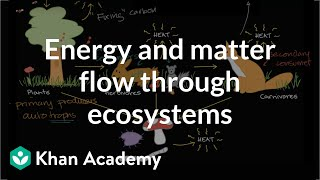Flow of energy and matter through ecosystem    Ecology   Khan Academy
