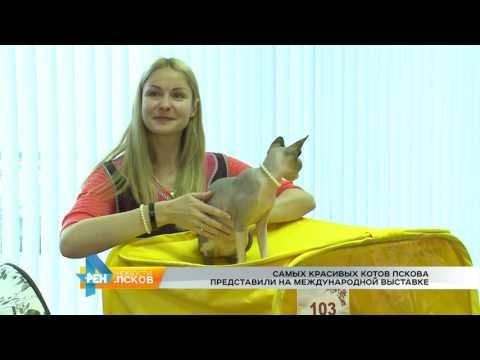 Новости Псков 21.11.2016 # Выставка кошек