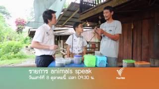 """Animals Speak - """"ด้วงกว่าง"""" สัตว์เลี้ยงบ้านนา"""