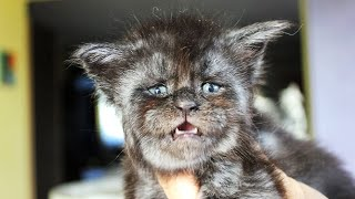 Котенок с человеческим лицом по имени Валькирия