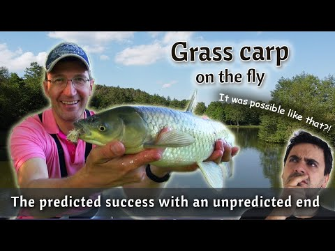 FLY FISHING for grass carp on the lake   My top fly pattern for carp on the private lake