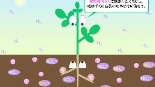 根粒菌VSマメ科植物会議ゆうきのバイオロジー