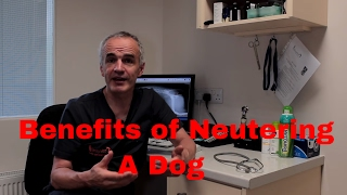 Neutering A Dog : Benefits Of Neutering Your Dog