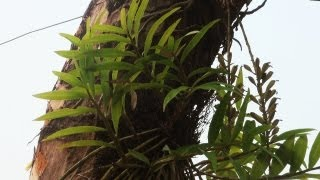 Parasitic Plants in Manas National Park