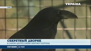 Киевский дворик с воронами выставили на продажу