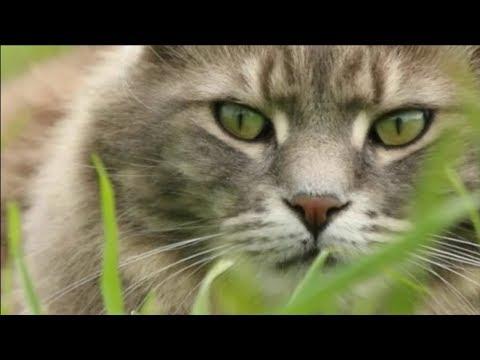 Животные забирают болезни хозяев