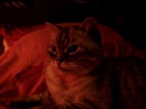 pourquoi dit on j'ai un chat dans la gorge