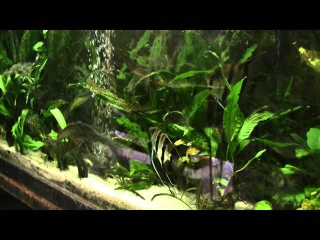 Ray's fish room - 2015 update