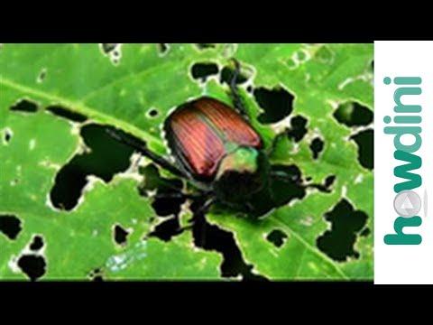 Paggamot para giardia at parasites