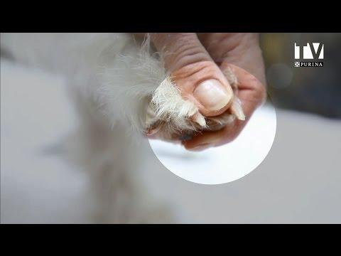 Le traitement des ongles petrozavodsk