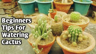 When To Water Your Cactus Plant || Golden Rule For Watering Cactus [ English Subtitle]