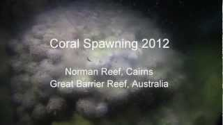Coral Spawning was first scientifically witnessed 30 years ago by several marine biologists working on the Great Barrier Reef. It's Mother Nature's way of maintaining a consistently robust coral gene pool. 