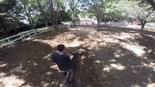 子供と遊びに出かけよう茨城のレジャースポット穴場発見!ポティロンの森乗馬編