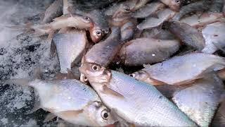 Рыбалка на мариинском пруду свердловская области