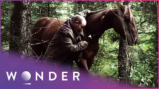 This Man Was Saved By His Horse After Surviving A Dangerous Bear Attack | Pet Heroes S1 EP7 | Wonder