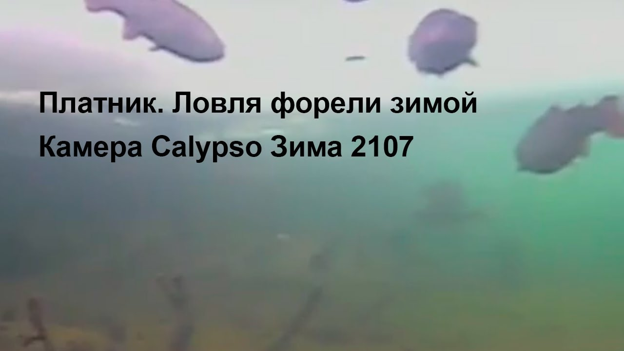 Платник. Ловля форели зимой Камера Calypso Зима 2107