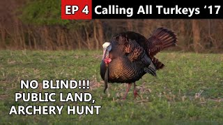 Gobbler Race! - Public Land Archery Hunt - Calling All Turkeys