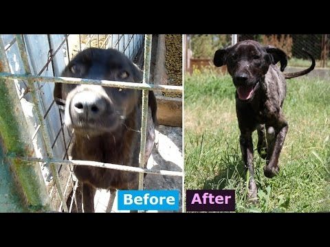 HOWL OF A DOG - Sad Dog Is Rescued & Can Run Again After Years Spent In Cage. Dog's Wish Comes True