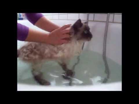 Katze richtig baden