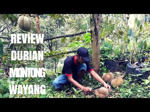 Belah Durian Montong Wayang