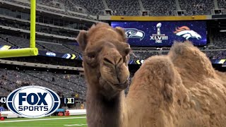 Geico Camel is the new FOX Sports sideline reporter