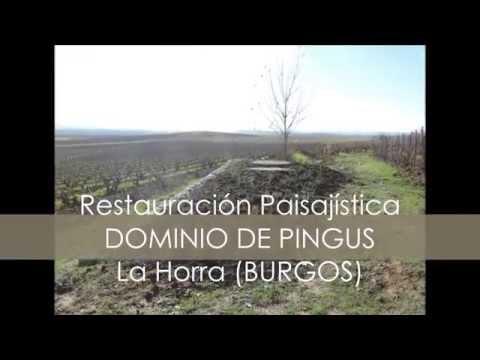 DOMINIO DE PINGUS. La Horra. BURGOS. http://alcamabu.es/