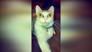 Приколы с животными 2019 Смешные видео про кошек 2019 Видео про котов до слёз смешные кошки 2019 №29