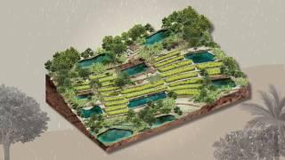 เกษตรทฤษฎีใหม่(3/8): การเก็บน้ำด้วยโคก หนอง นา โมเดล