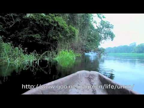 丸木船で行くカメルーンのNyong river