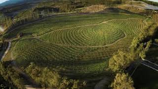 Wise Traditions podcast #189 Secrets of the Biggest Little Farm