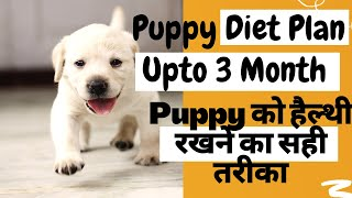 how many times to feed puppy per day | puppy diet chart for first 3 month | PetLover