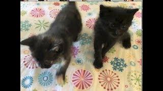 Kittens Go Exploring & Start Potty Training - #17 - Feral Cat Family Socialization