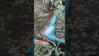 preview picture of video 'Mancing gabus pake ikan sepat'